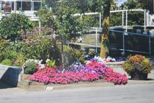 Bluffers Park Marina Wins a Trillium Garden Award